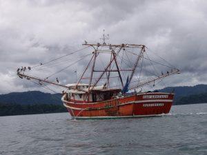 La pesca de camarón por arrastre es un arte de pesca no-sostenible
