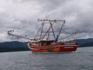Shrimp trawling is one of the most unsustainable  types on fishing practiced