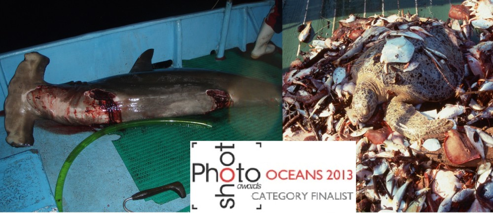 "Pretoma is finalist in marine photography competition ""OCEANS 2013"""