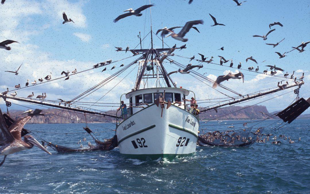 Sala Constitucional acoger recurso contra INCOPESCA por renovacion de licencias para la pesca de arrastre camaronero