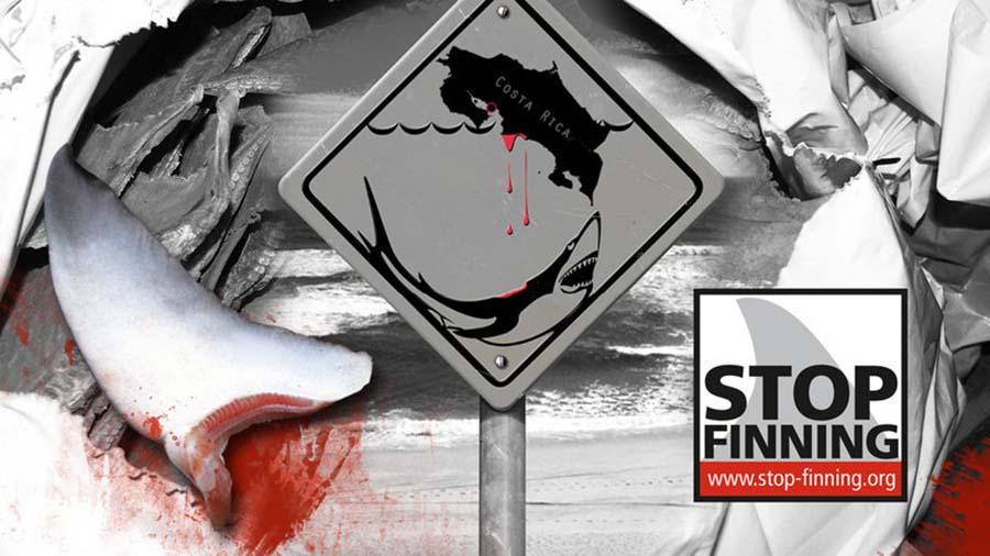 Enemigo de los Tiburones