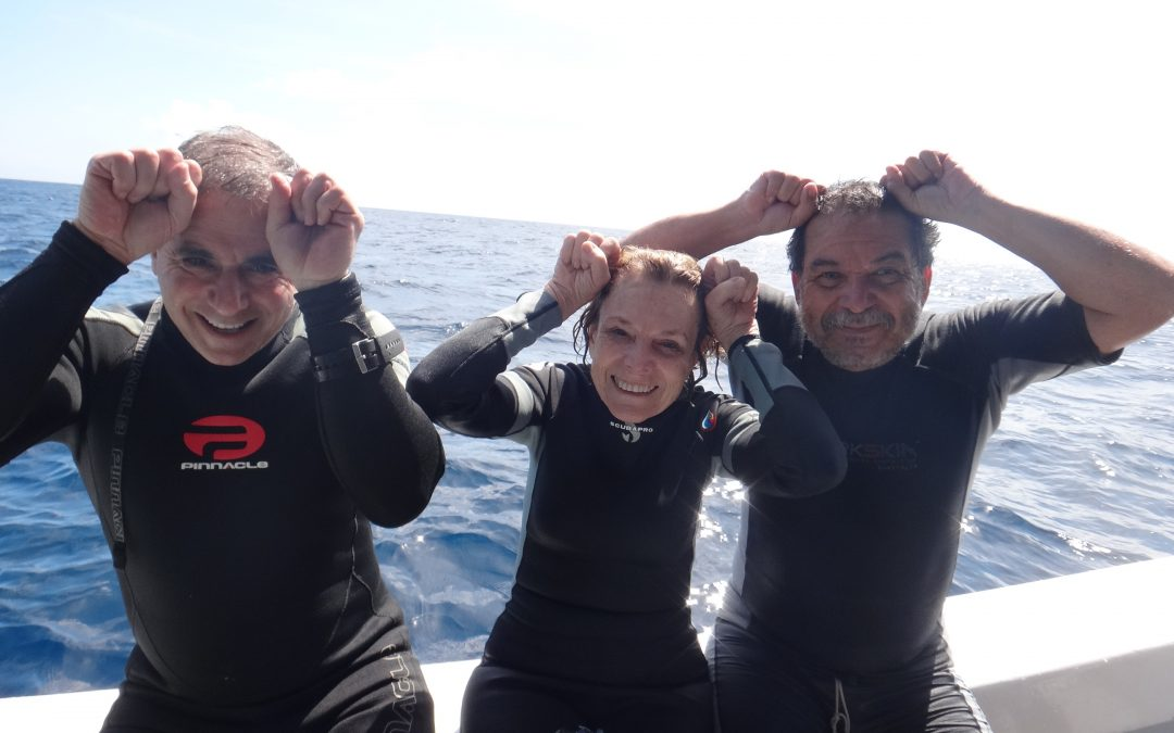 "Hammerhead Shark ""Sylvia"" generates first batch of information on her movements around Cocos Island, Costa Rica"