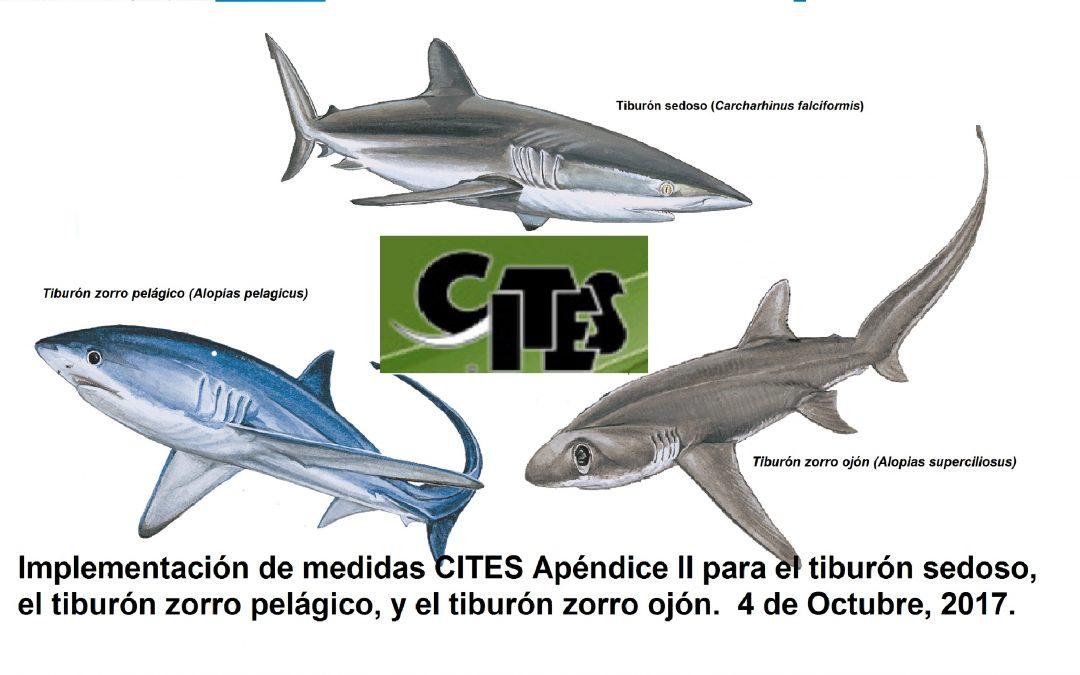 Regulaciones CITES para el tiburón sedoso efectivas desde ayer