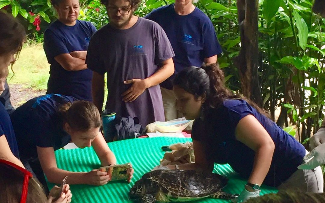 CREMA's project on Hawksbill Sea Turtles Will be Exposed at Cambridge University