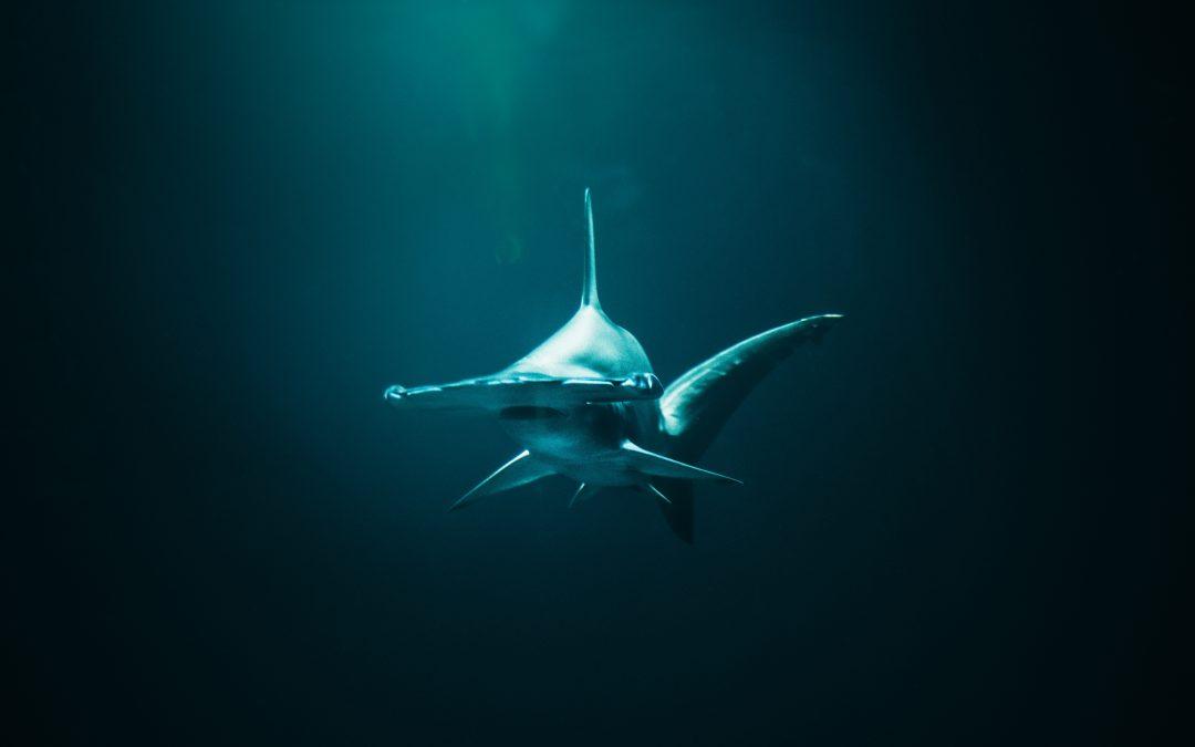 Canada acaba de prohibir las importaciones y exportaciones de aletas de tiburón