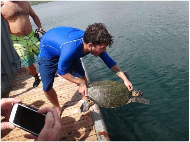 Hawksbill Sea Turtle Research in Costa Rica