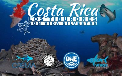 Costa Rica pierde diversidad marina. Por qué?