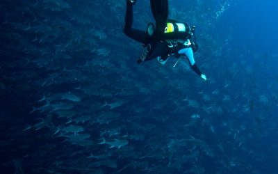 """Crema invites you to a """"Citizen Science Diving Workshop"""""""