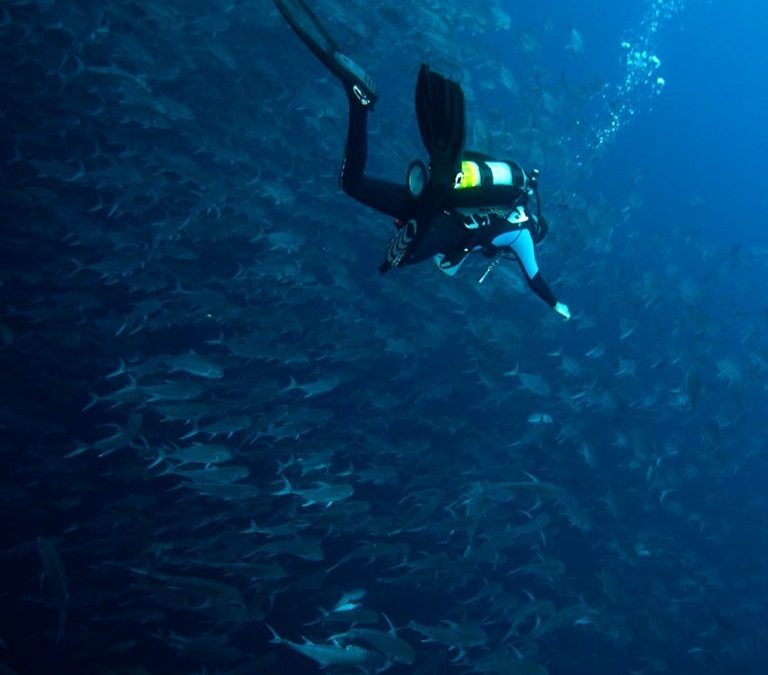 "Crema invites you to a ""Citizen Science Diving Workshop"""
