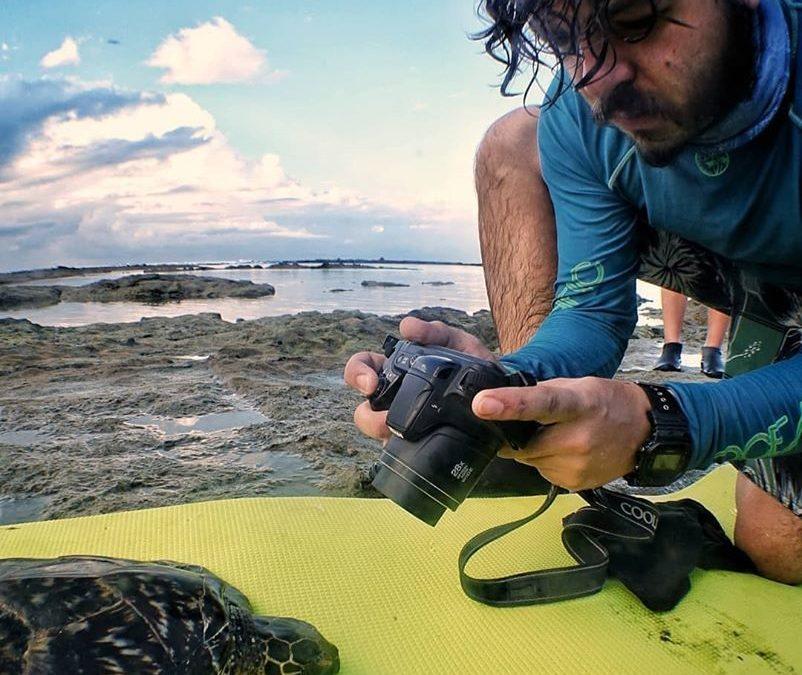 Crema continues monitoring the Hawksbill Sea Turtle