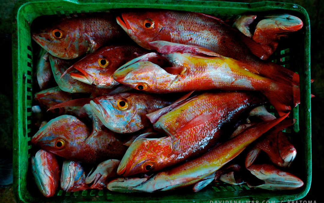 Snapper fishery rebounds in Coyote and Bejuco, Nandayure, Guanacaste, Costa Rica