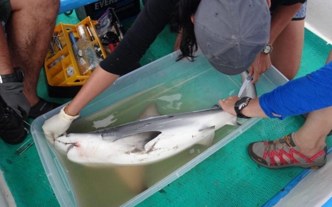 CREMA researches megafauna in the coastal waters of the Nicoya Peninsula