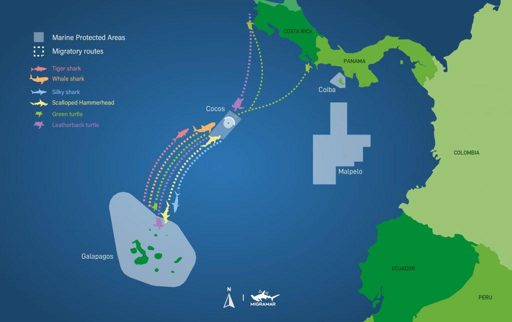 Ruta migratoria Tiburón Tigre